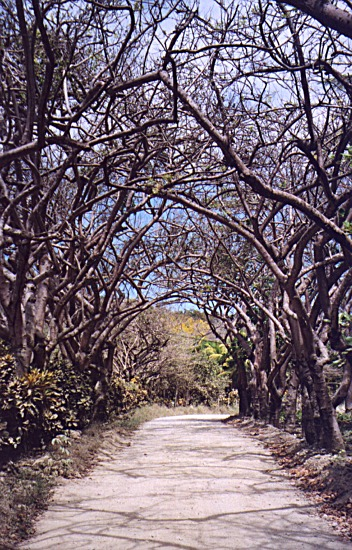 Road to Cabo Blanco National Park