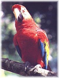 Costa Rica reisverhaal