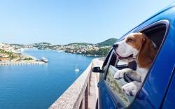 Reizen met honden