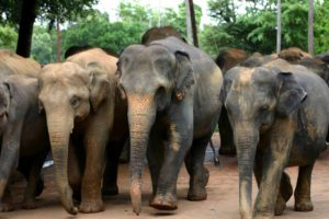 Reizen en vakantie in Sri Lanka