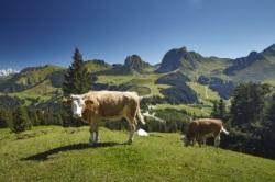 Reizen en vakantie in Zwitserland