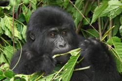 Reizen en vakantie in Oeganda