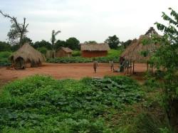 Reizen en vakantie in de Centraal Afrikaanse Republiek