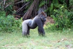 Reizen en vakantie in Gabon