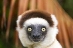 Reizen en vakantie in Madagascar
