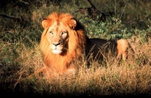 Reizen en vakantie in Swaziland