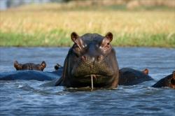 Reizen en vakantie in Zambia.