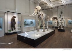 Australian Museum in Sydney