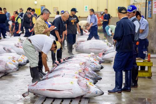 Tsukiji Vismarkt in Tokyo