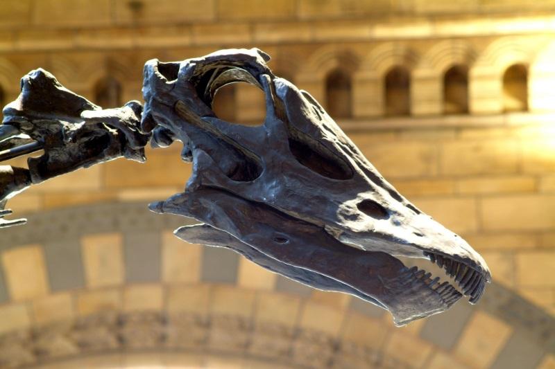 Hoofd van Dippy in Natural History Museum, Londen