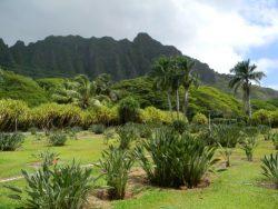 Vakantie in Oahu, Hawaii